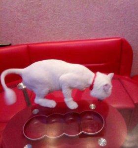 Стрижка кошек котов