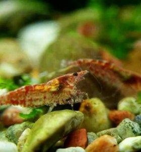Морской зверь (креветки, улитки, гуппи)