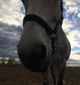 Катание на лошади !