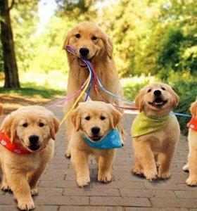 Прочие услуги (фотограф, пиар, вязки, выгул собак)
