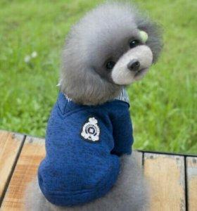 Одежда для собак Кофта