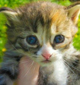 Отдам в дар маленькую кошечку