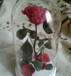 Роза под стеклом