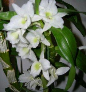 Все для выращивания орхидей