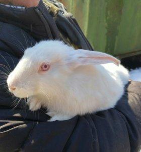 Продаются кролики разных пород