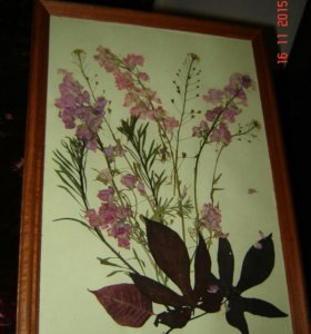 Панно с сухоцветами