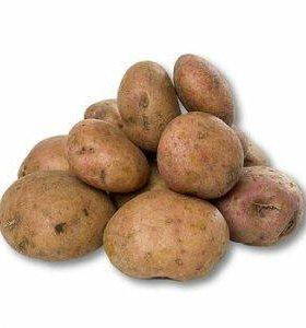 Картофель крупный ( на еду) В ИВОЛГИНСКЕ