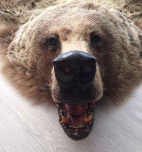 Ковер шкура медведя