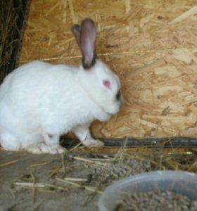 Кролики крольчихи