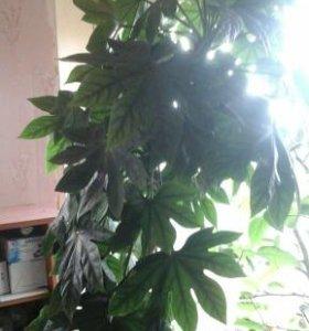 Цветок Отросточки шикарной пальмы
