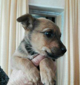 Найден щенок, 1мес, отдам в хорошие руки