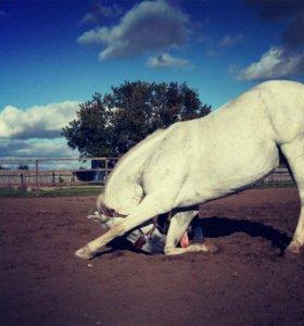 Лошадка на фотосессии 🐴