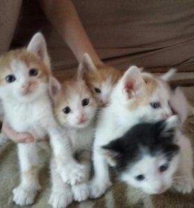 Веселые котятки в добрые руки