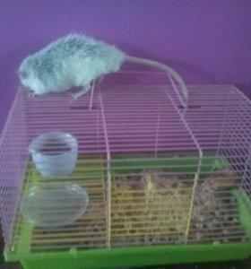 Крыса с клеткой