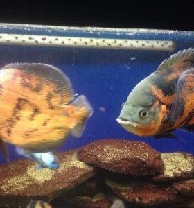 Аквариум с рыбами на 370 литров,и аксессуарами