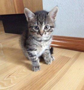 Котёнок в добрые руки