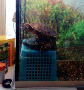 Породам черепах