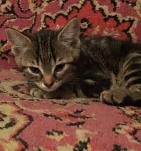 Котёнок девочка.