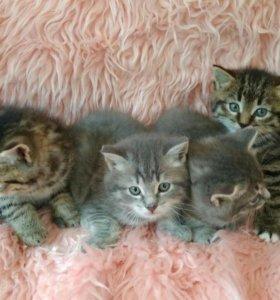 Чудесные котята бесплатно