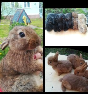 Кролики 3 мес
