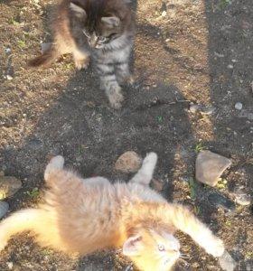 Котятки