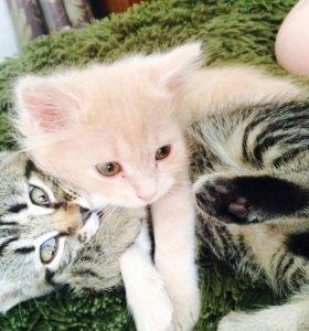 Отдаю котиков в добрые руки