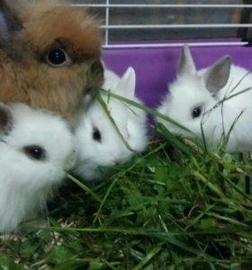Мини кролики