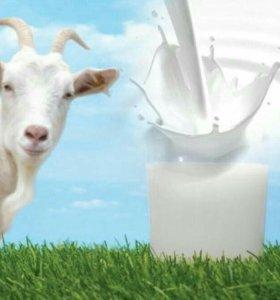 Козье молоко и творог (г. Жигулёвск)