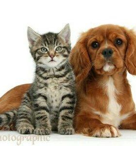 Прогулка собак и кошек-котов (разных)