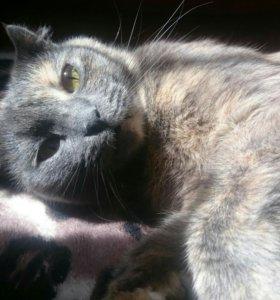 Срочно отдается кошка