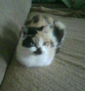Кошка стерелизованная.