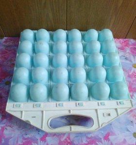Решотка для яиц.