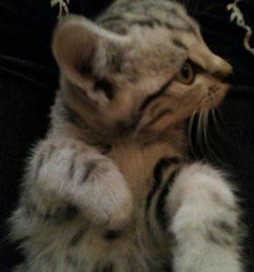 Отдам котёнка в хорошие руки!Бесплатно.