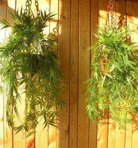 Искусственные растения в кашпо