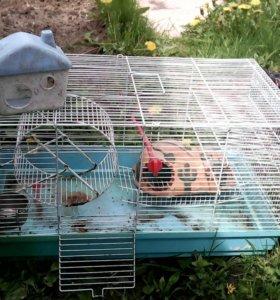 Клетка для грызунов с обстановкой