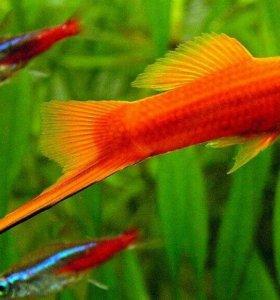 аквариумные рыбки,растения