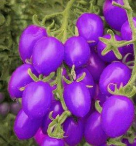 Семена фиолетовой помидоры