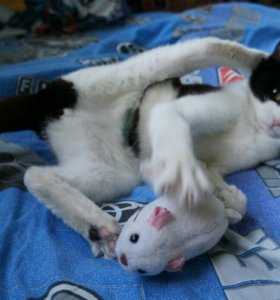 Кошка. Стерилизована.