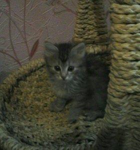 Кошечка, родилась на пасху
