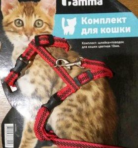 Поводок для кошек.