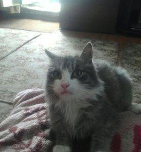 Породистую кошку один год