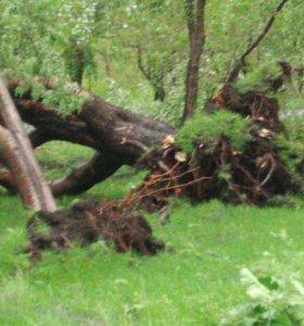 Саженцы кустов жасмин сирень калина и деревьев