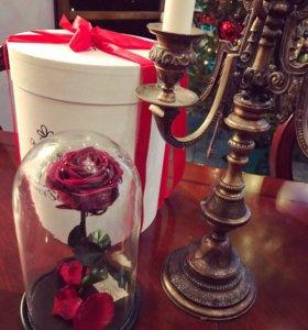 Роза вечная , Супер ЦЕНА !в стеклянной колбе.