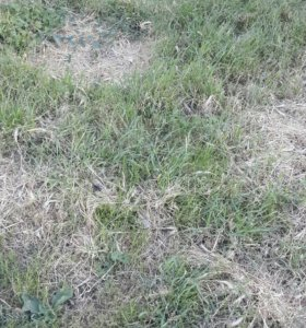 Участок, от 7 до 15 сот., сельхоз (снт или днп)