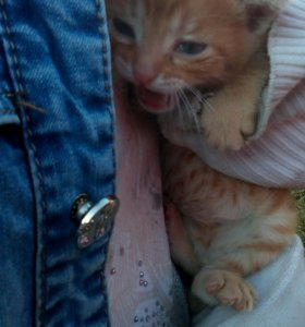 Кошки в Белозерске