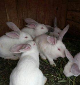 Кролики цена за шт!!!
