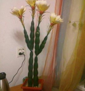 Продам цветущий кактус!