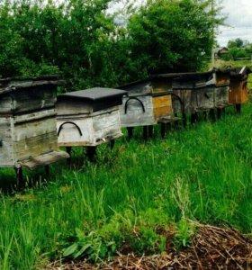 Продаю пчелофермы