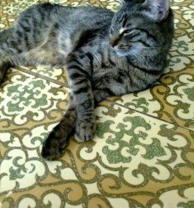 Тигровая кошечка