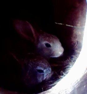 Кролики 2 месяц